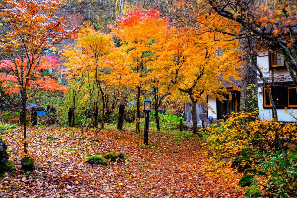Lamp No Yado Aoni Onsen during Autumn